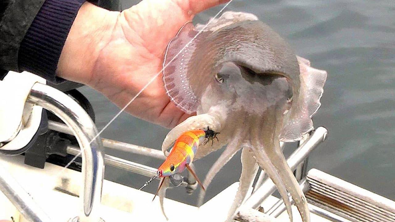 Pesca alla seppia dalla barca